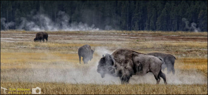 An Off-the-Beaten Path Guide to Yellowstone National Park