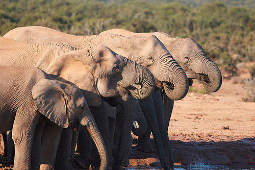Addo-Elephant-National-Park
