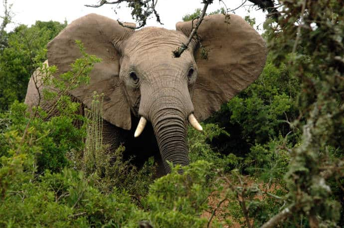 Addo-Elephant-National-Park-2