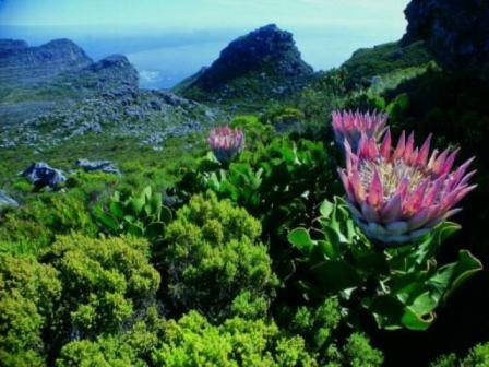 Table-Mountain-National-Park-2