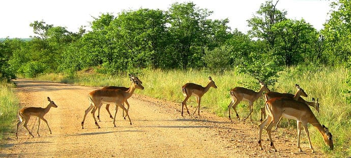 kruger-national-park-featured-image