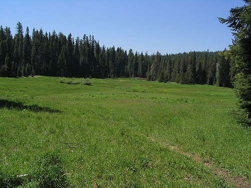 Clearing-Near-White-Wolf-Campground