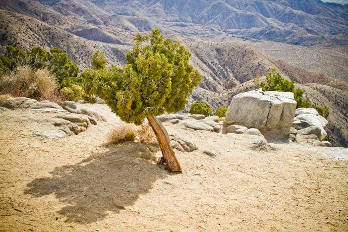 Guide to Joshua Tree National Park - When To Go and What To Do