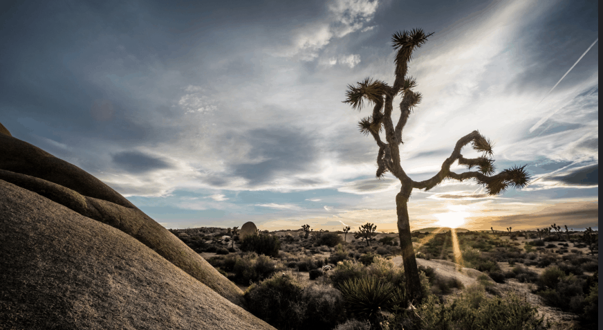 Guide To Joshua Tree National Park When To Go And What To Do